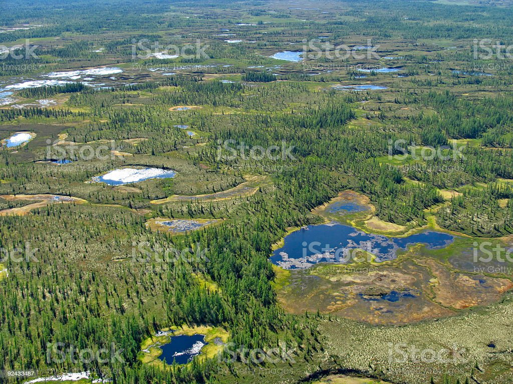 Aerial view on forest-tundra stock photo