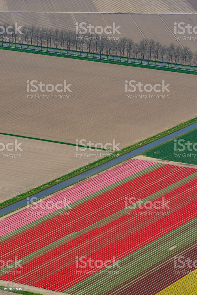 Aerial view on Tulip fields growing in spring in Holland stock photo