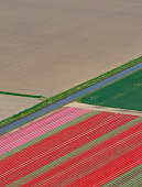 Aerial view on Tulip fields growing in spring in Holland
