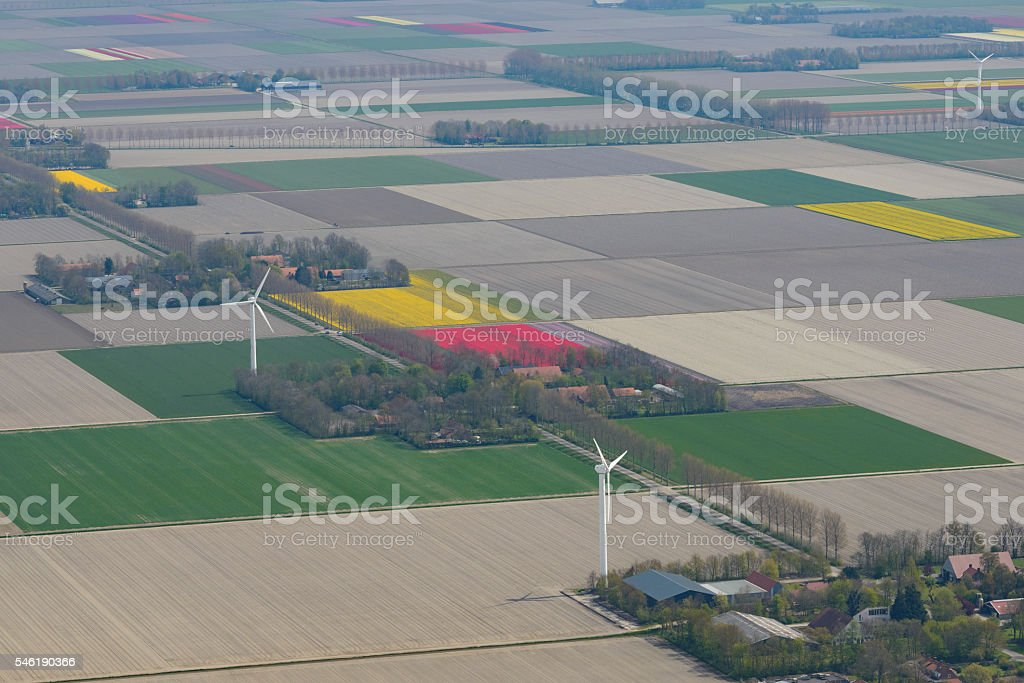 Aerial view on tulip flower fields in spring in Holland stock photo