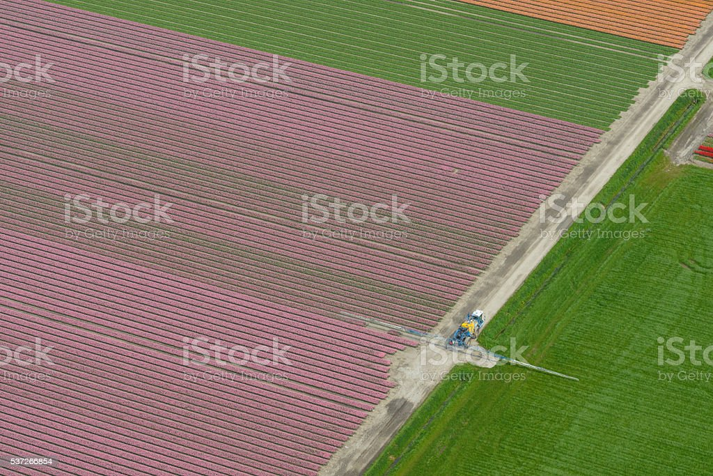 Aerial view on tulip flowers fields with a crops sprayer stock photo
