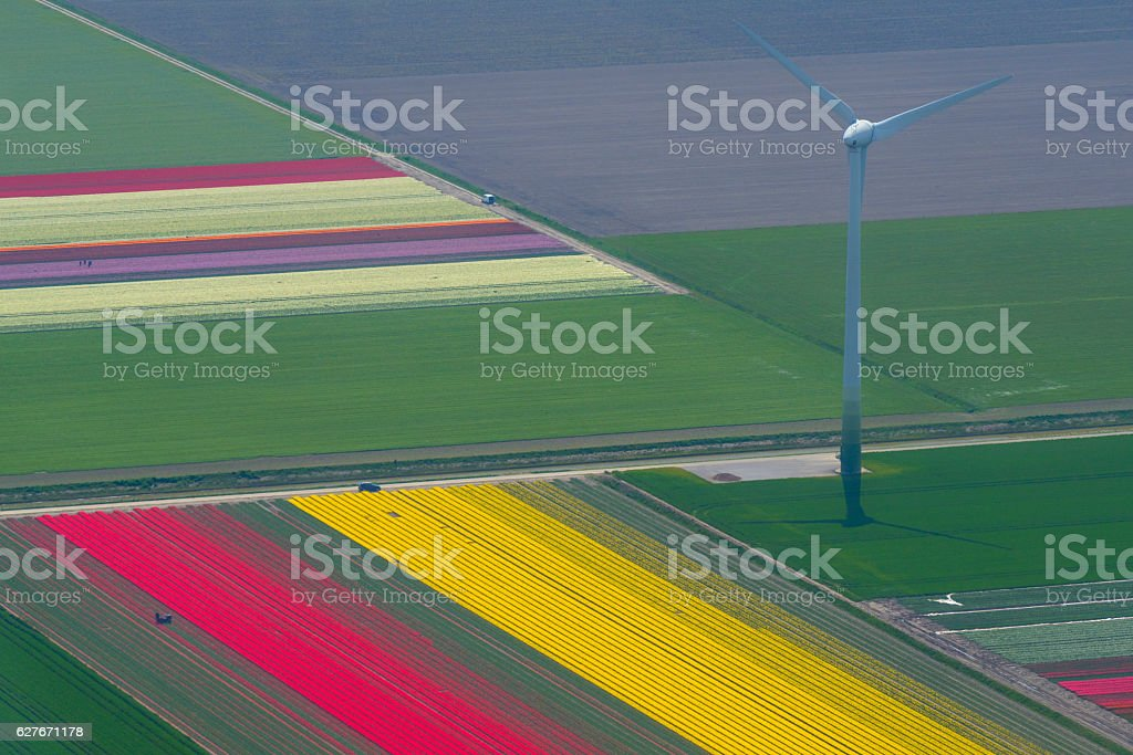 Aerial view on wind turbines between fields of tulip flowers stock photo