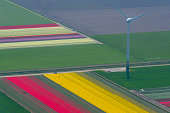 Aerial view on wind turbines between fields of tulip flowers