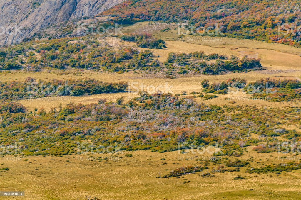 Aerial View Patagonia Forest. Argentina stock photo