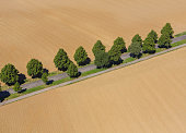 Aerial view village of treelined road with trees