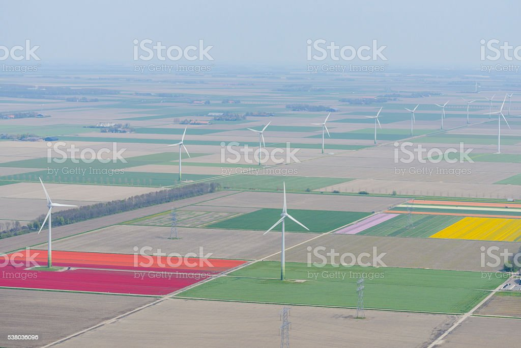 Aerial view wind turbines and tulip flower fields stock photo