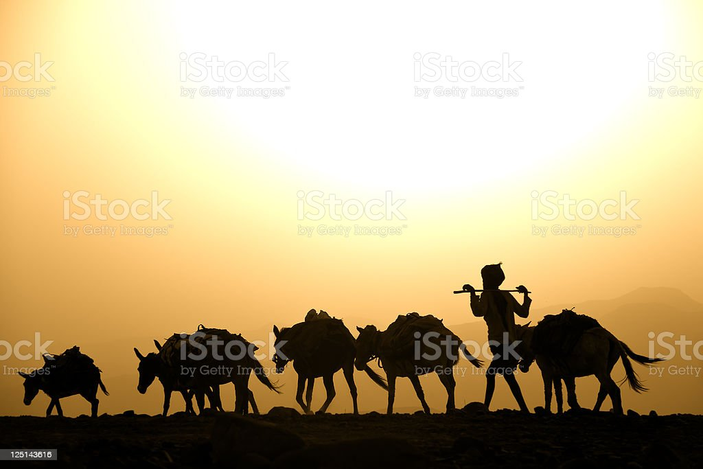 Afar herder with his mules against the sunset, Danakil Desert stock photo