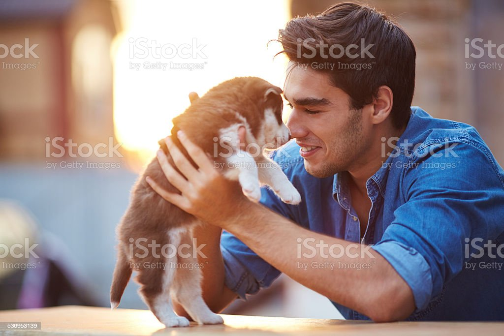 Affectionate dog owner stock photo
