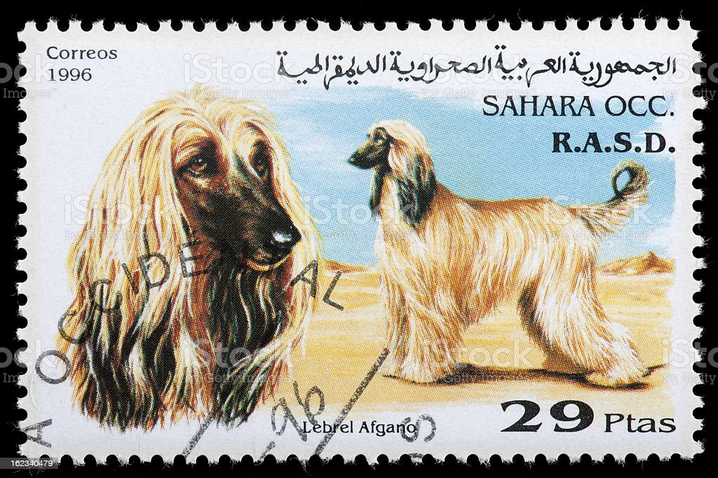 Afgan Hound Postage Stamp Featuring stock photo