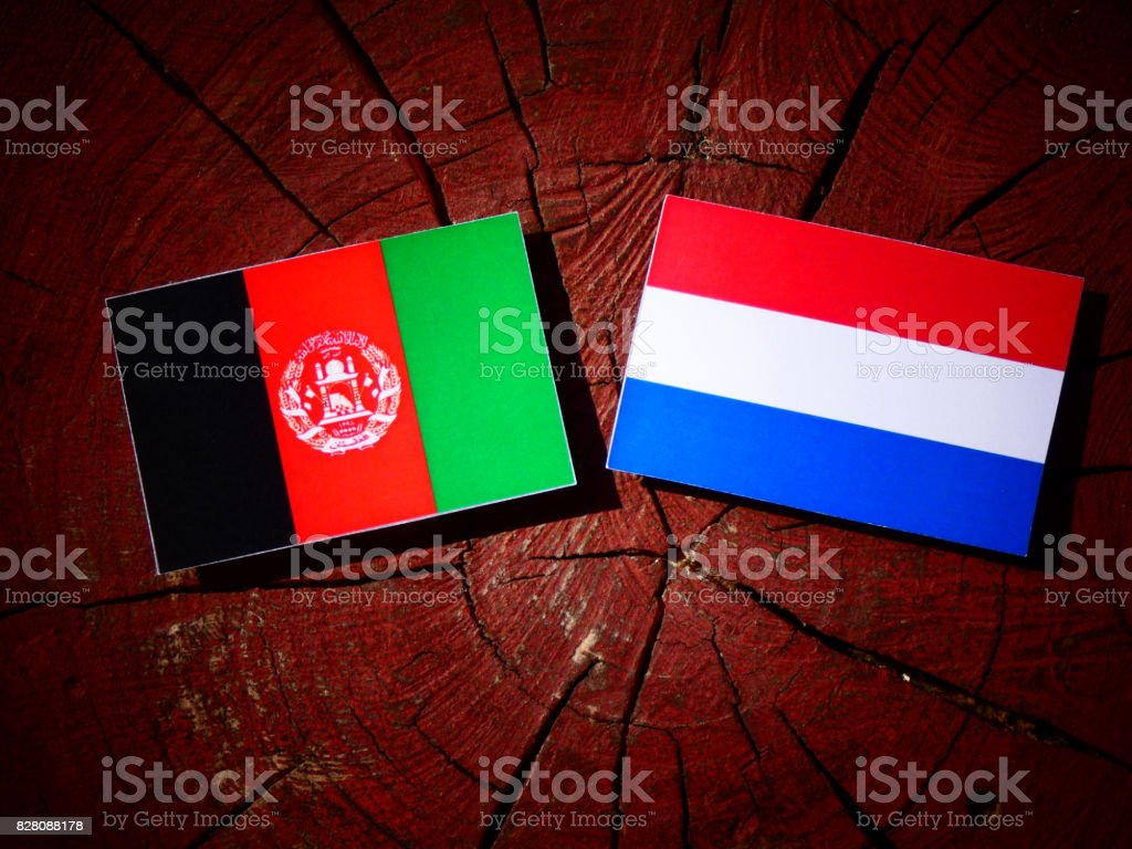 Afghanistan flag with Dutch flag on a tree stump isolated stock photo
