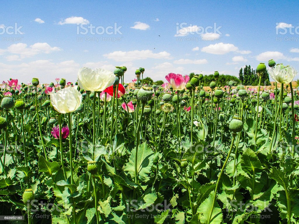 Afghanistan lanscapes stock photo