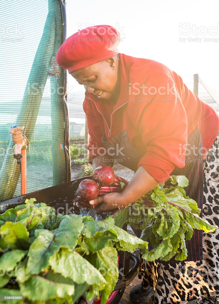 Afrcian woman washing harvested vegetables stock photo