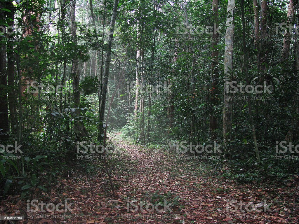Africa Jungle Dense Forest Lush Foliage Nature Rainforest Landscape stock photo
