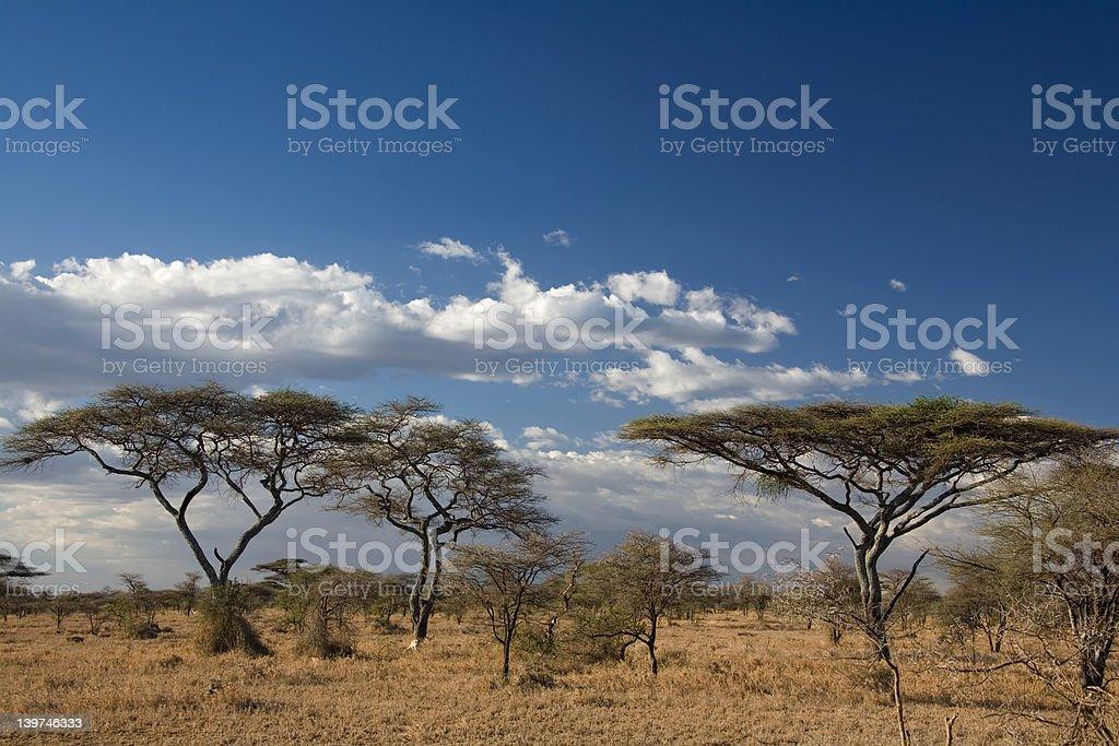 africa landscape 023 serengeti royalty-free stock photo