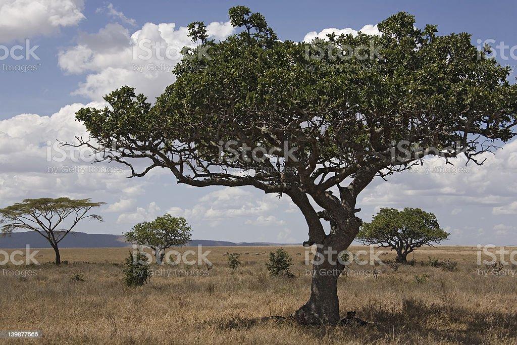 africa landscape 028 serengeti stock photo