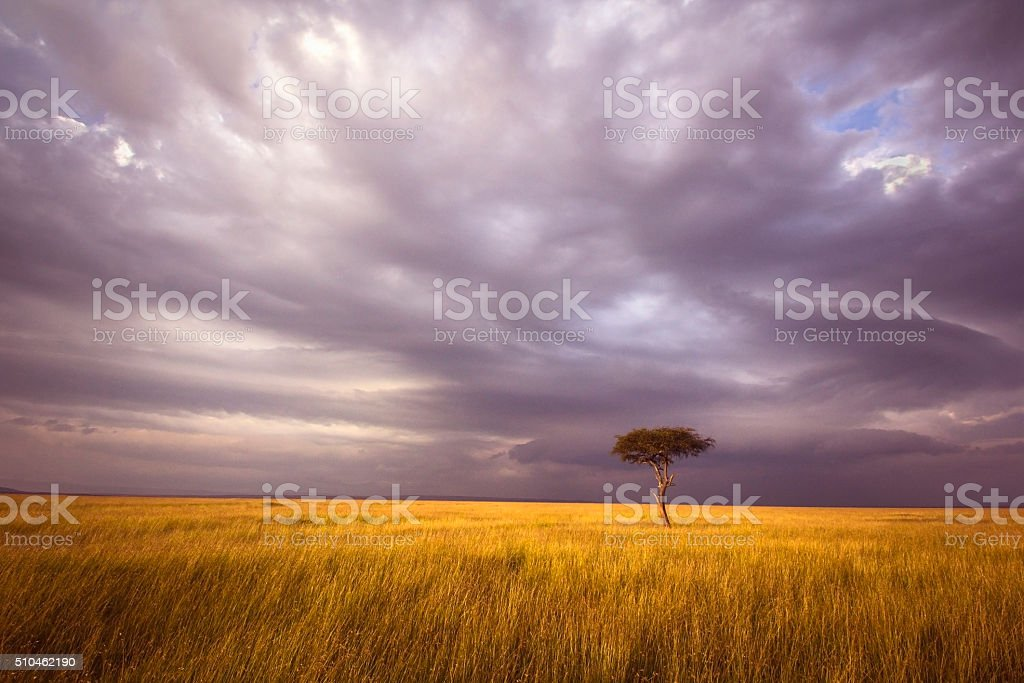 Africa landscape stock photo