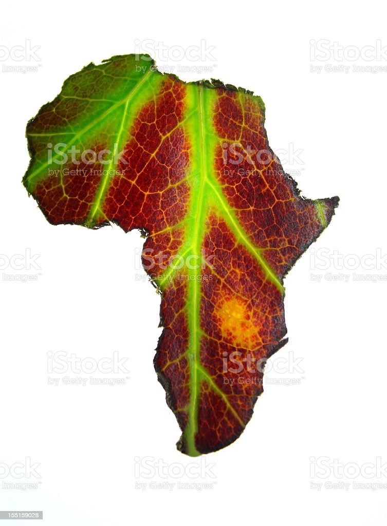 Africa leaf royalty-free stock photo