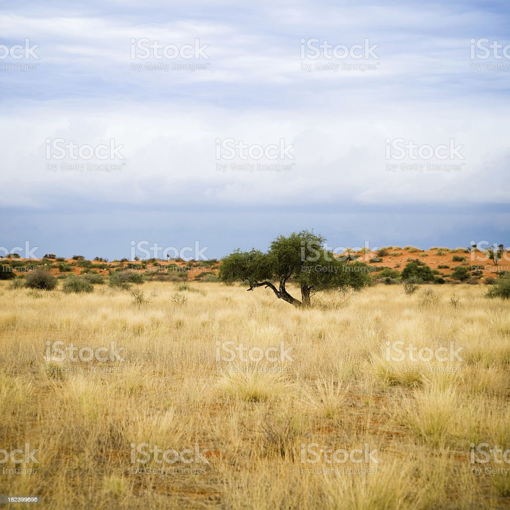 Africa Prairie Landscape royalty-free stock photo
