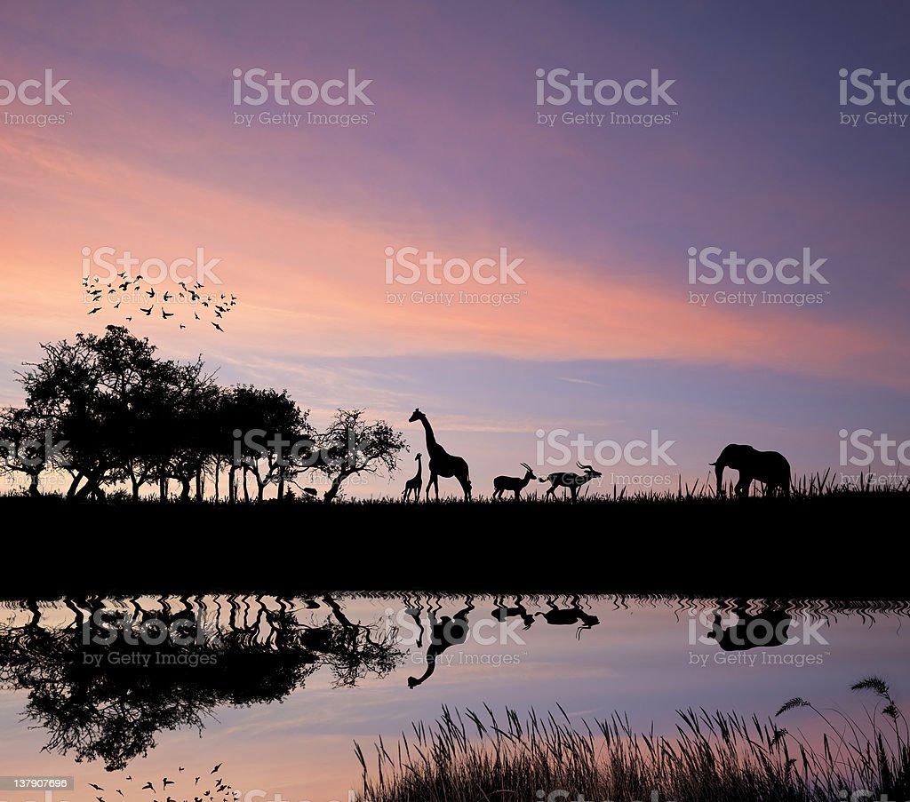 Africa safari concept of wild animals silhouette against sunset stock photo