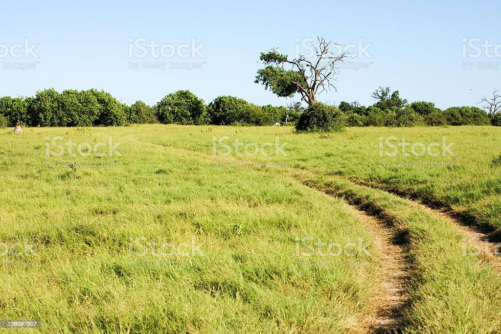 Africa savannah landscape royalty-free stock photo