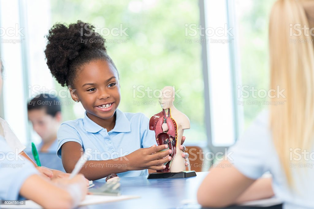 African American elementary student studying human body in science class stock photo