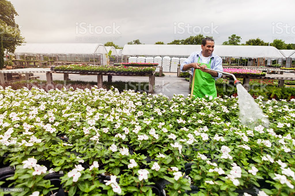 African American garden center employee waters flowers stock photo