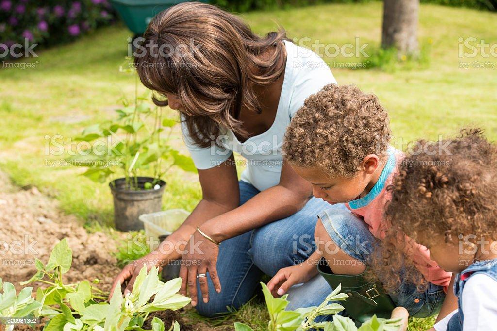 African American Gardener Gardening With Her Children stock photo