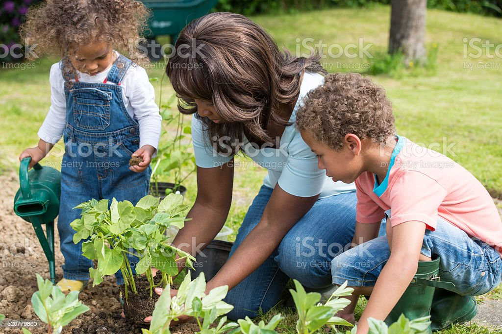 African American Mother Gardening With Her Children stock photo