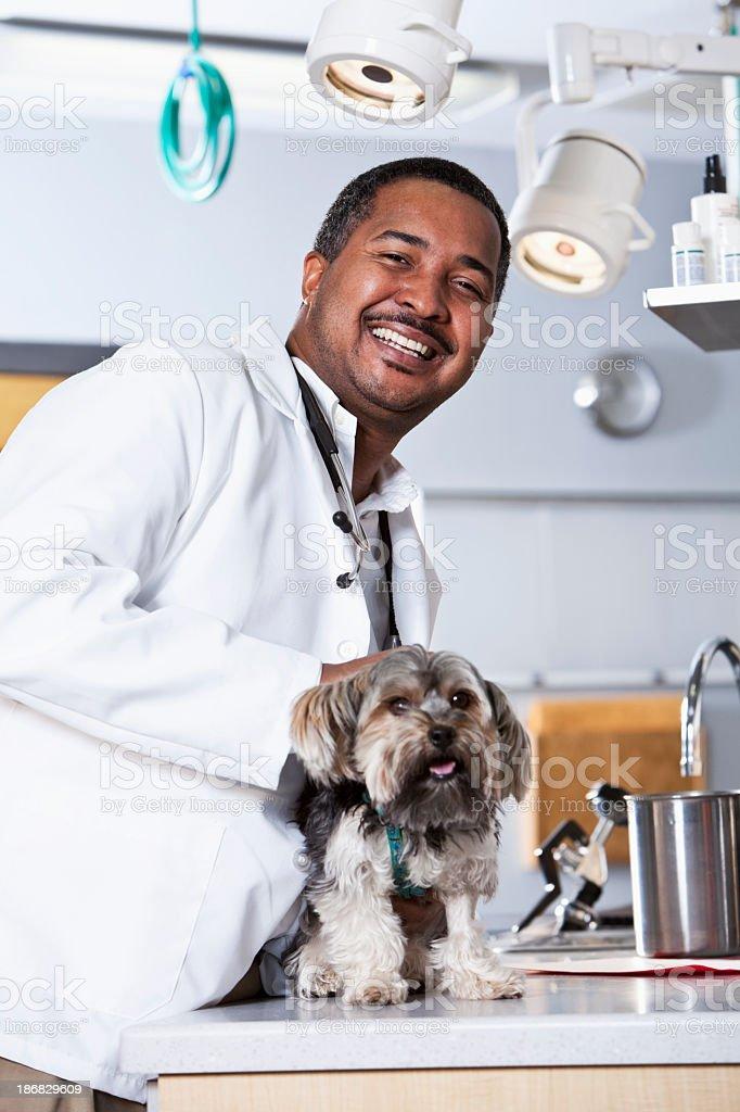 African American veterinarian examining dog stock photo