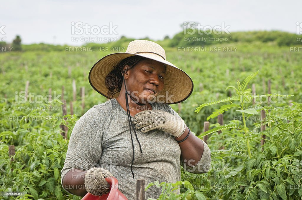 African American Woman in Harvest stock photo