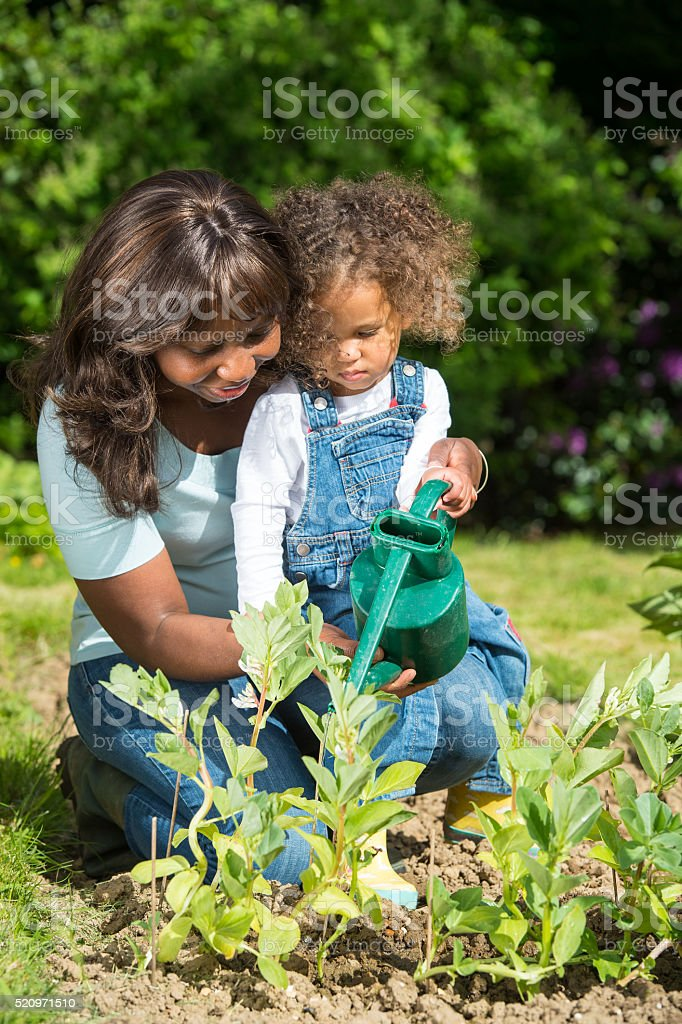 African American Woman Teaching Daughter How To Water The Garden stock photo