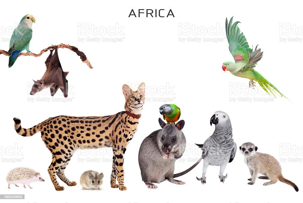 African animals on white stock photo
