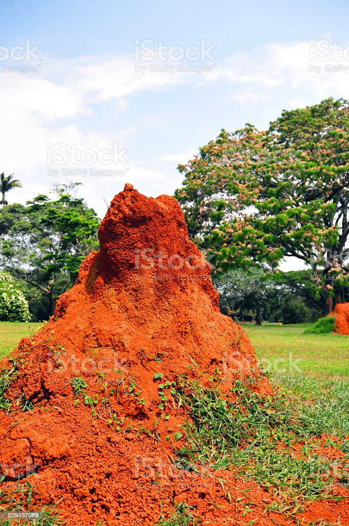 African anthill stock photo