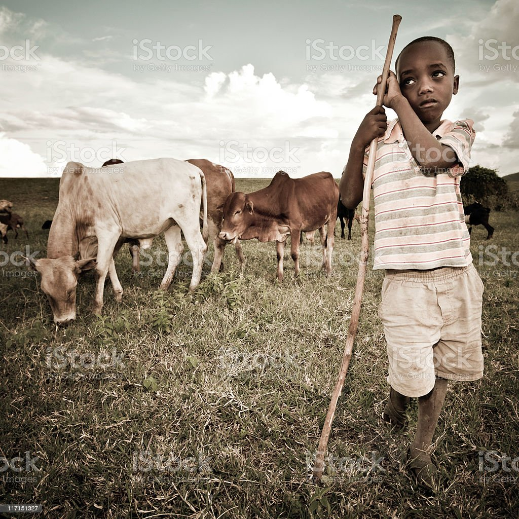 African Boy Watching a Herd of Cattle stock photo