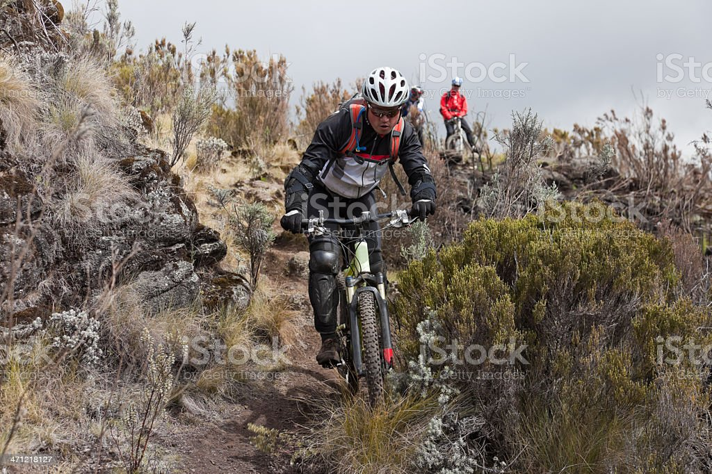African bush downhill, Mt. Kenya NP royalty-free stock photo