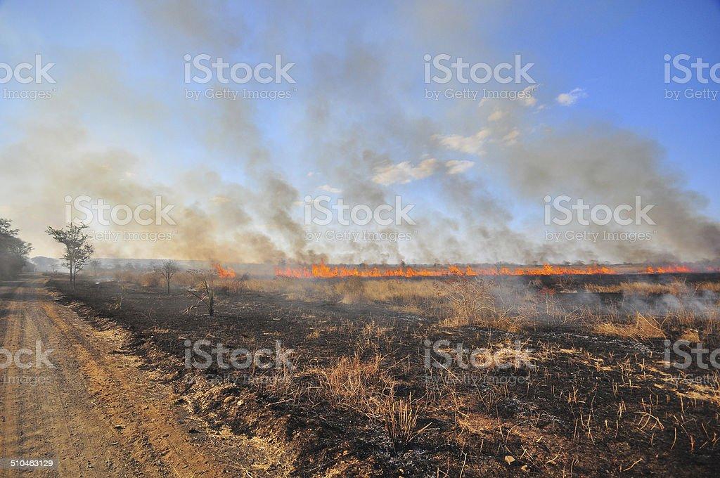 African Bushfire stock photo