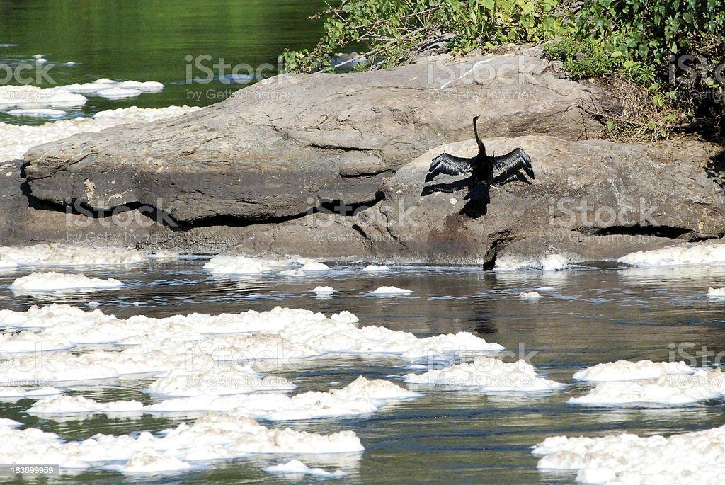 African Darter bird sunning on rocks Victoria Nile Uganda royalty-free stock photo