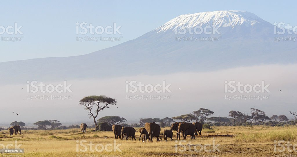 African Dawn stock photo