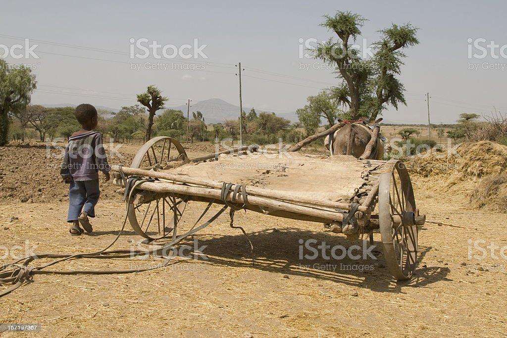 African donkey wagon Ethiopia royalty-free stock photo