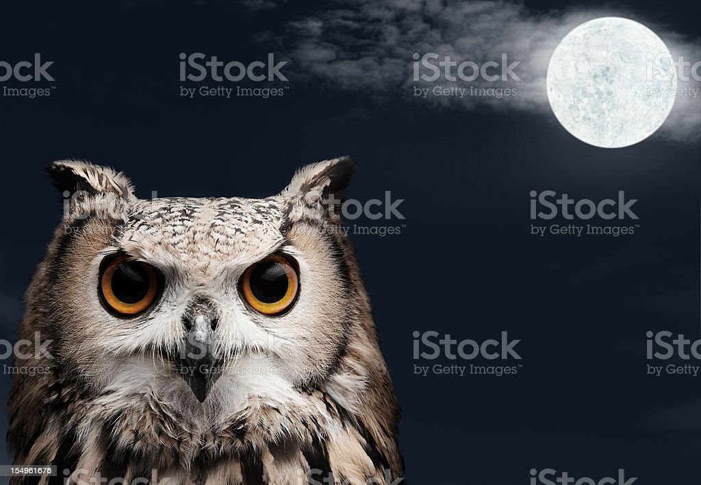 African Eagle Owl royalty-free stock photo