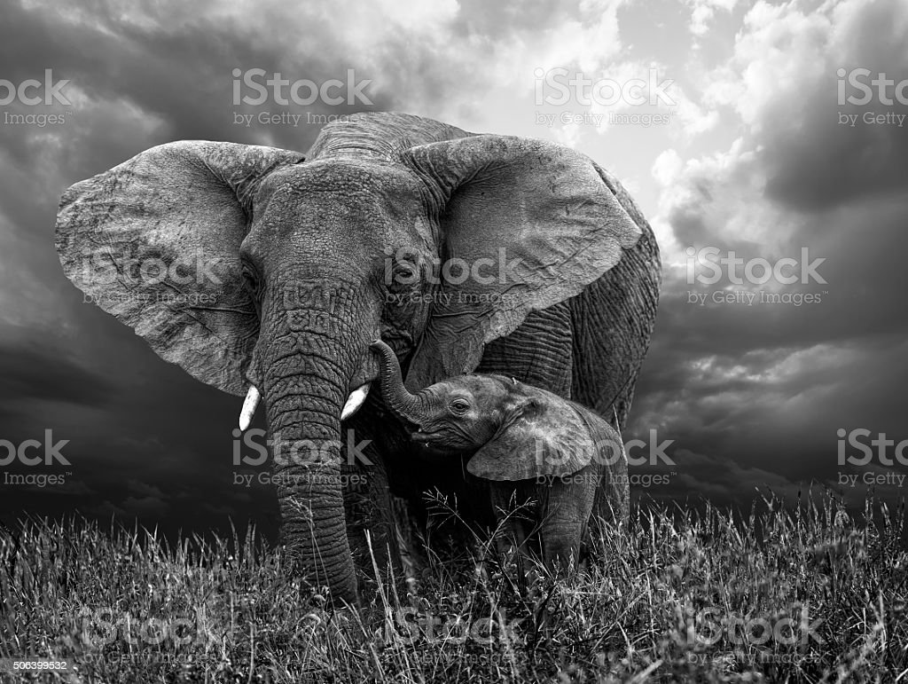African Elephant and baby stock photo