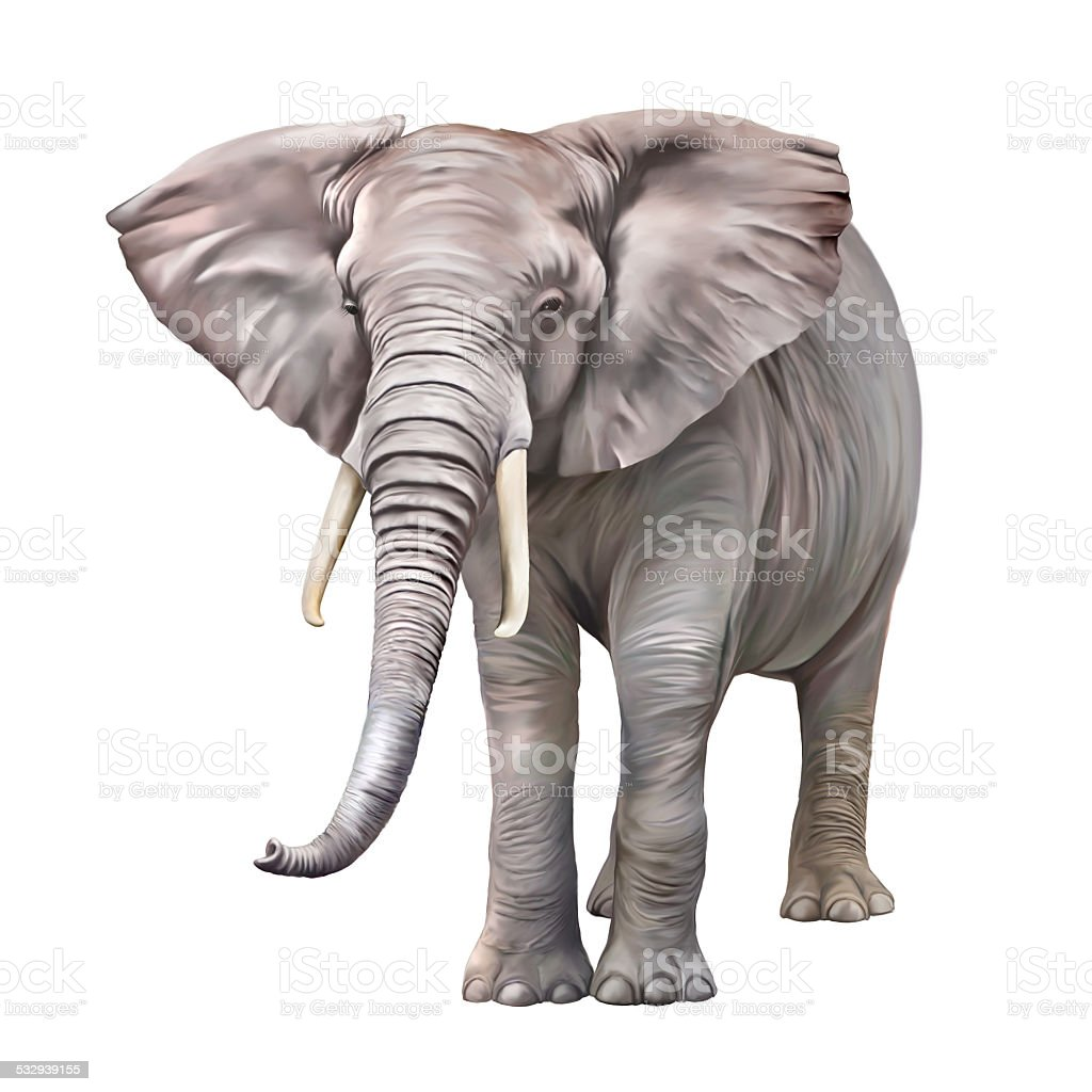 African elephant, Loxodonta africana stock photo
