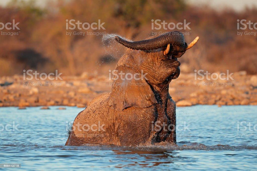 African elephant playing in water, Etosha National Park stock photo