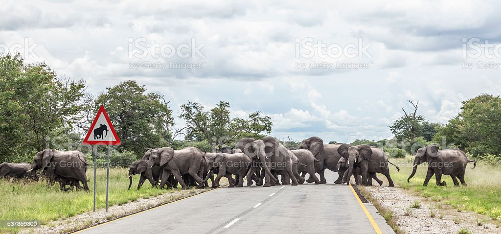 African elephants crossing Golden Highway, Namibia, Africa stock photo