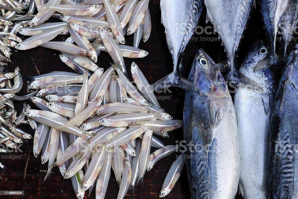 African Fish Market stock photo