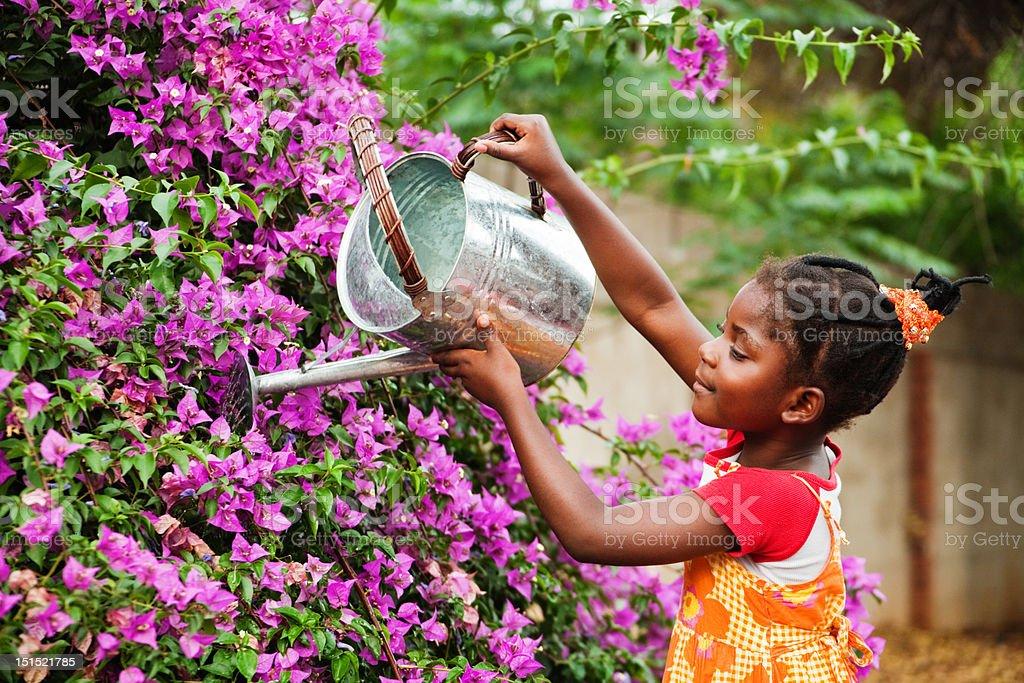 african gardener stock photo