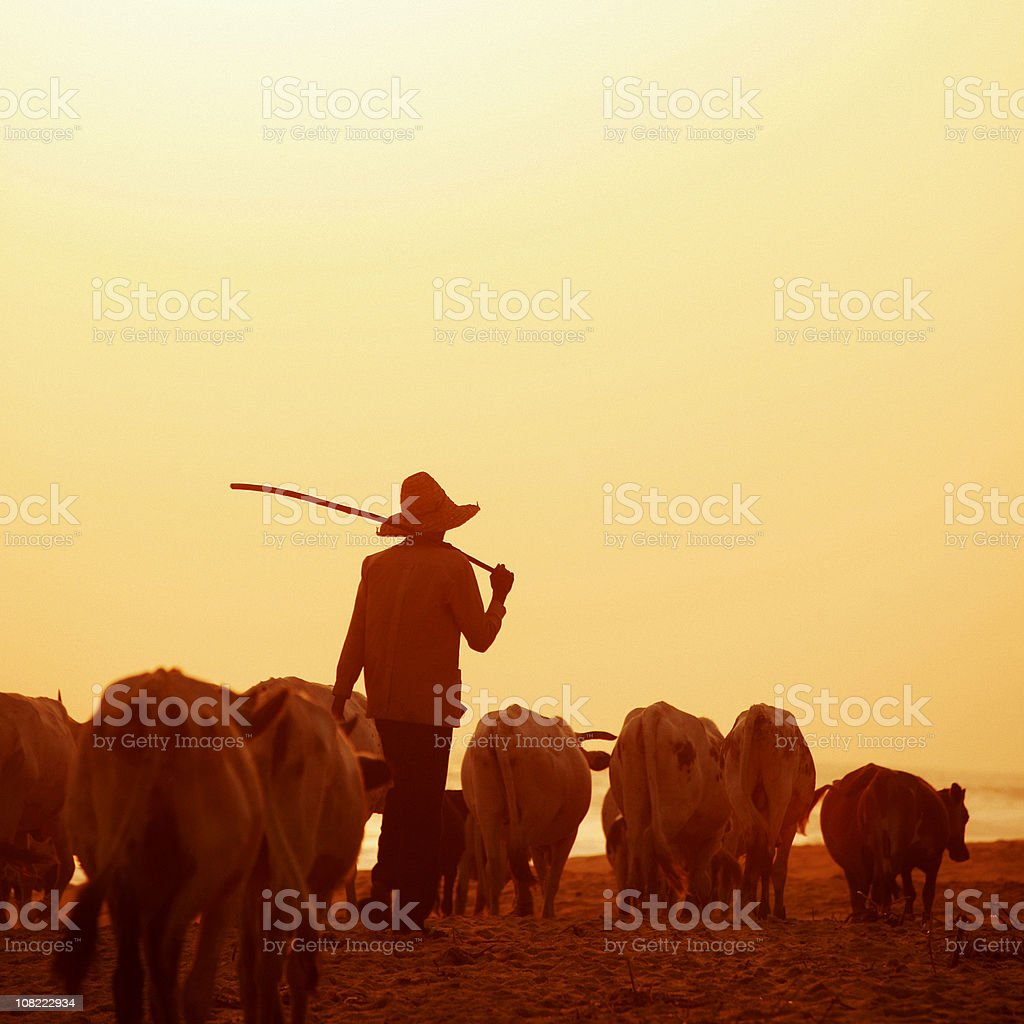 african herdsman stock photo
