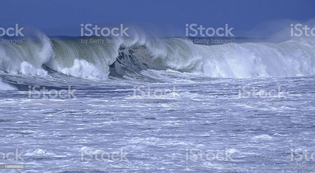 African Indian Ocean Beauty. stock photo