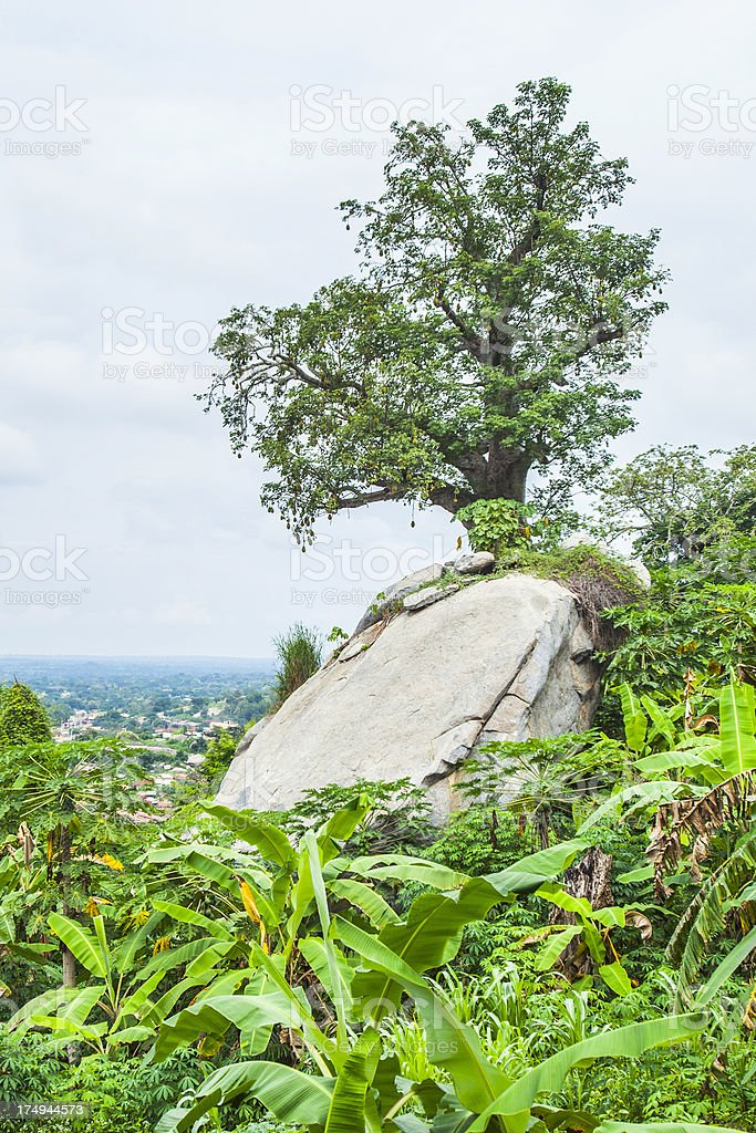 African landscape stock photo