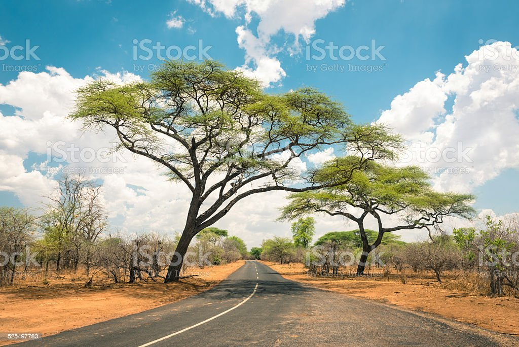 African landscape with empty road and trees in Zimbabwe stock photo